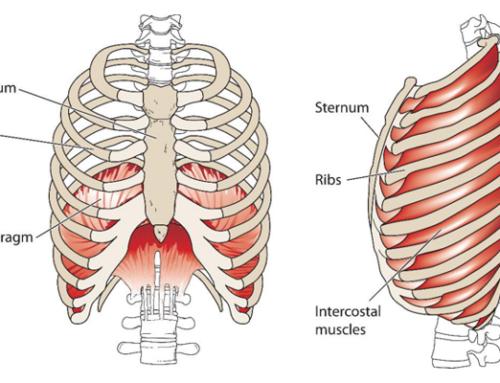 Hvad er diafragma og hvorfor er den så vigtig?